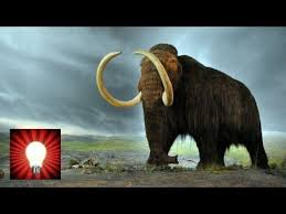 woolly mammoth cloning possibility genius