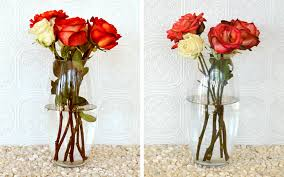 How Much Is A Dozen Roses How To Keep Roses Alive More Com
