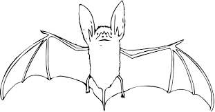 bat coloring pages 3 coloring pages print