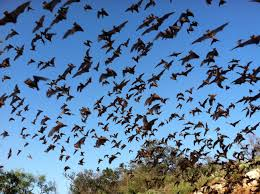 mavericks of the bat world