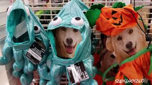 dog halloween costumes 2017 halloween costumes for your pets shopping at michaels 2017 youtube