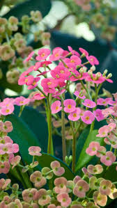Climbing Plants That Flower All Year - 25 easy houseplants easy to care for indoor plants