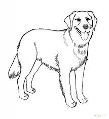 golden retriever coloring pages for property cool coloring pages
