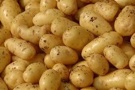 pomme de terre robe de chambre pommes de terre au four ou en robe de chambre recette plats