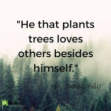 tree quotes and sayings