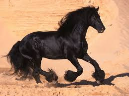 ferrari horse wallpaper black horse desktop wallpapers this wallpaper