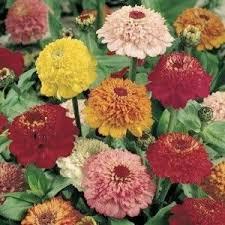 64 best seed order contenders images on pinterest garden seeds