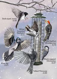 35 best phylum chordata class aves birds images on pinterest