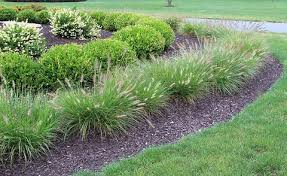 types of ornamental grasses dambly s garden center
