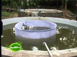 success story of aquaculture both ornamental as well as inland