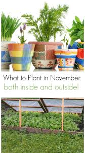 what to plant in november both inside and out turning the clock back