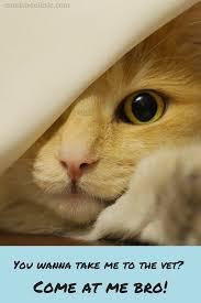 Diabetes Cat Meme - diabetes in cats part 2 things you should know about diagnosis