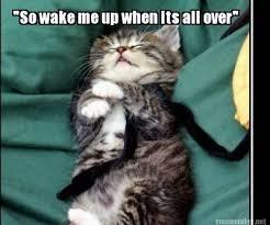 Sleepy Kitty Meme - meme maker feeling so sleepy