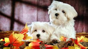 cute fall wallpapers sweet wallpapers group 75