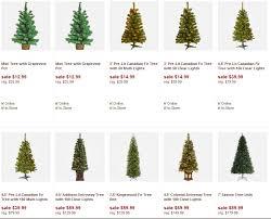 deal tree beatiful tree