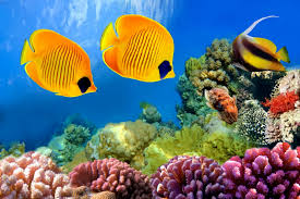 Home Decor Coral by Online Get Cheap Ocean Coral Reef Aliexpress Com Alibaba Group