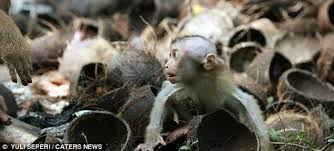 Baby Monkey Meme - mischievous monkey who tried to run away from mother is put in his