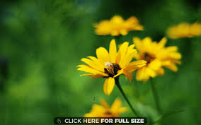 Summer Flowers by Yellow Summer Flowers Wallpaper