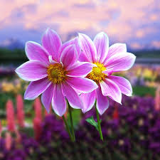 google images flower cute flowers live wallpaper android apps on google play