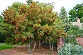 fruit trees that grow in colorado part 19 trees for the