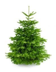 christmas tree online u2013 budapest u2013 buy christmas tree online