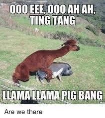 Llama Meme - 25 best memes about llama llama pig bang llama llama pig bang