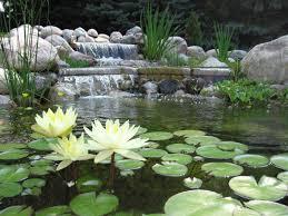 koi pond archives creative visions landscapes inc creative