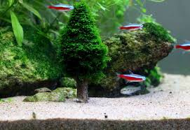 Aquascape Moss Shipping Asia Picture More Detailed Picture About Free Shipping
