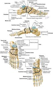 Os Calcaneus Foot And Ankle Clinical Gate