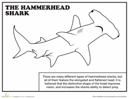 sharks coloring pages color coloring pages funycoloring