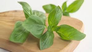 basilic cuisine le basilic une plante médicinale par excellence