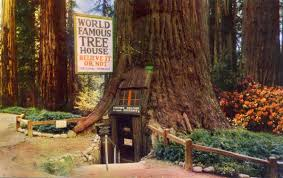 famous tree houses cory doctorow on twitter world famous tree house tree house
