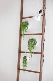 creative ways to display your plantsdentelle fleurs