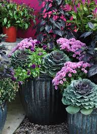 5895 best container gardening images on pinterest flowers