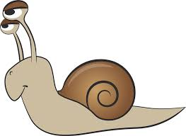 animal clipart snail