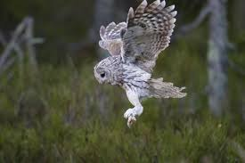 Where Do Barn Owls Live Where Do Owls Live And What Do They Eat What Do Owls Eat