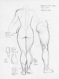 Female Anatomy Reference Drawing References Character Design Female Pinterest