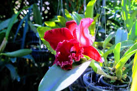 bai orchid butterfly farm picture of orchid and butterfly farm