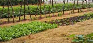 choosing the best position for your vegetable garden