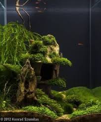 Aquarium Aquascapes Nature Aquarium Cool Ideas Pinterest Aquariums Water And