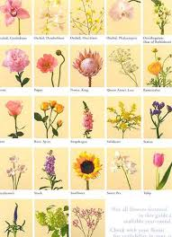 All Types Of Flowers List - irish flowers and their meanings pics of flowers and their