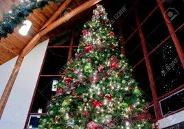 this dramatic image is of a large indoor tree stock