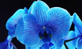 blue orchids blue orchid thai cuisine in jacksonville fl