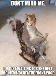 Squirrel Meme - patient squirrel imgflip