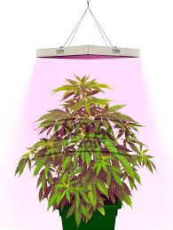 vintage grow best led grow lights for indoor plants perfect