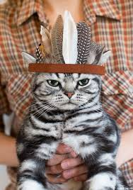 thanksgiving indian chief chief kitty