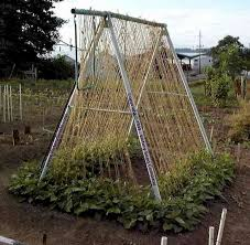 Flower Trellis Ideas Bean Growing And Trellising Information From Victory Seeds
