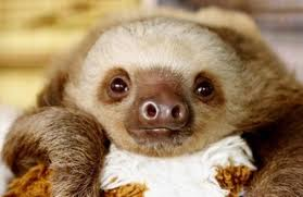 10 cutest sloth to celebrate sloth week one green planet