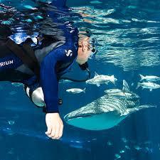 Georgia snorkeling images Swim with whale sharks experience georgia aquarium jpg