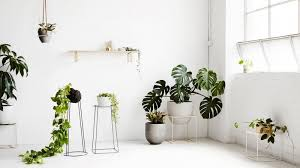 how to choose the right indoor plants for your home re max